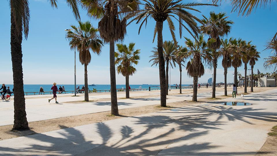 960x540-barcelona-beach-life-palm-trees.jpg