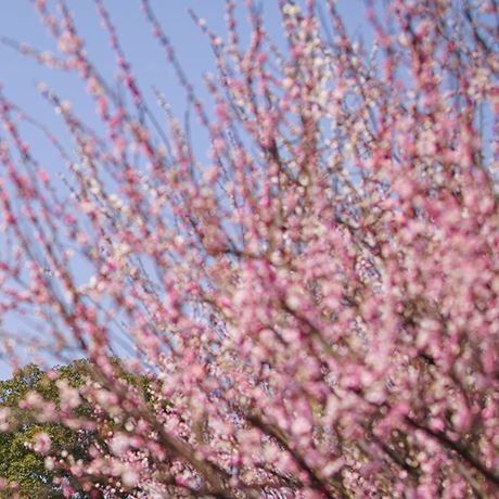 2000x700-header-spring-is-in-bloom-bicester-village.jpg